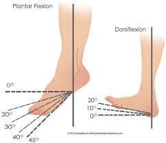 the ankle bone is connected to the shin bone proactive physical, Human Body